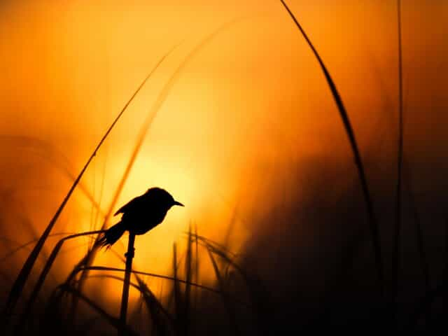 Bird with a bright orange and red sunset